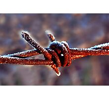 frosty rusty barb wire Photographic Print