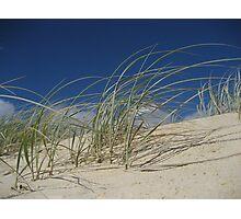 Dune Grass001 Photographic Print