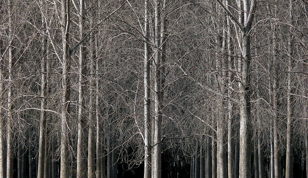 Trees by eclectic1