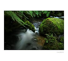7am - Cement Creek, Mt Donna Buang Photographic Print