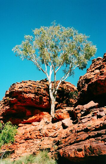 Outback Tree by Paige