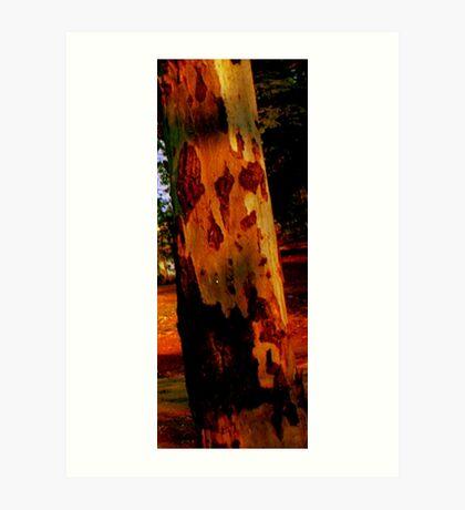 Eucalypt Art Print