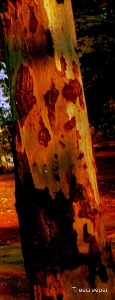 Eucalypt by Treecreeper