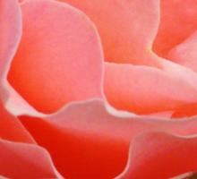 Delicate Pink Rose (Macro) Sticker