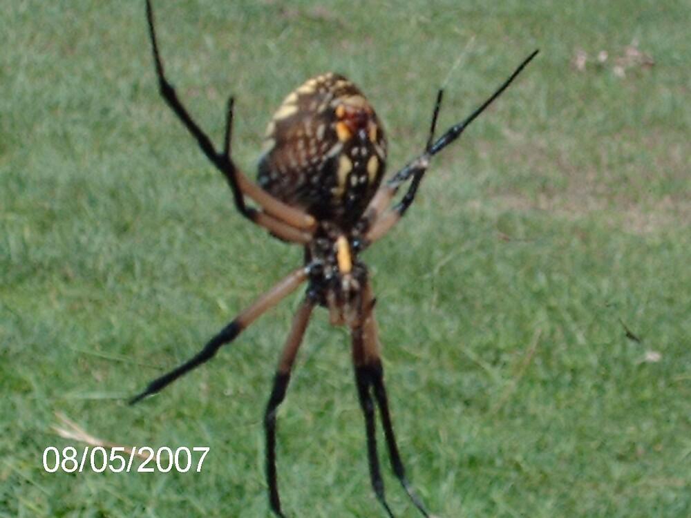 spider by adamtx711
