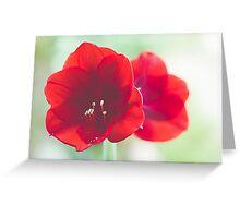 Amaryllis Symmetry Greeting Card