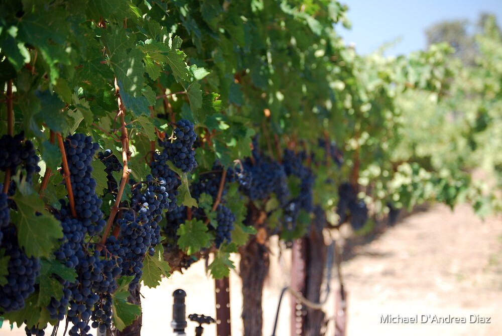 Grape Vine by Michael D'Andrea Diaz