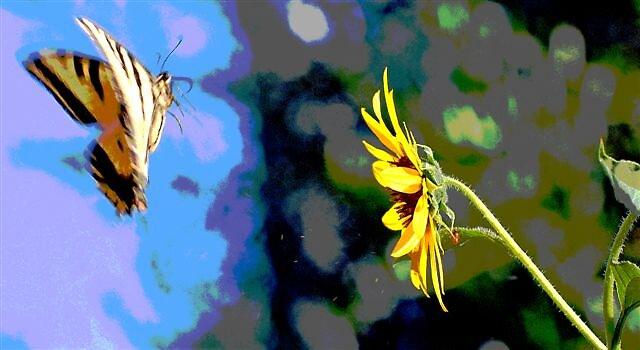 Flutterby  by raptrlvr