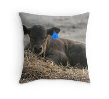 Calf in the Hay Throw Pillow