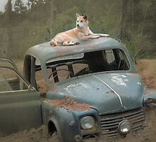 Dingo on antique car by FramedFeelings