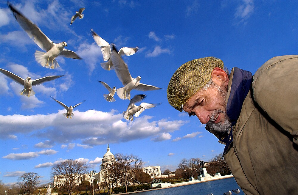 Birds by afisilver