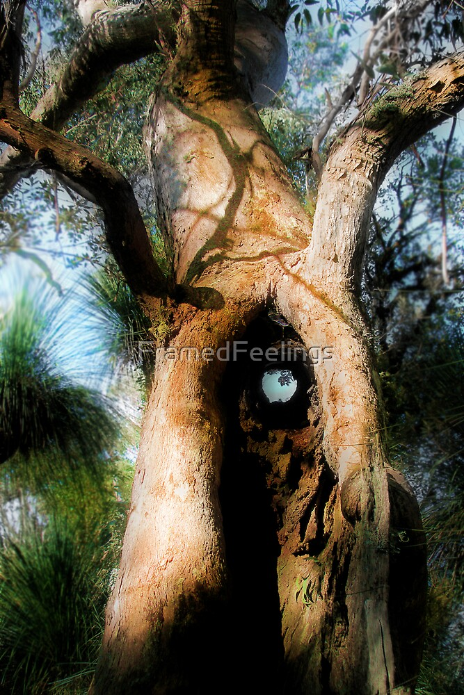 Hole in the tree by FramedFeelings