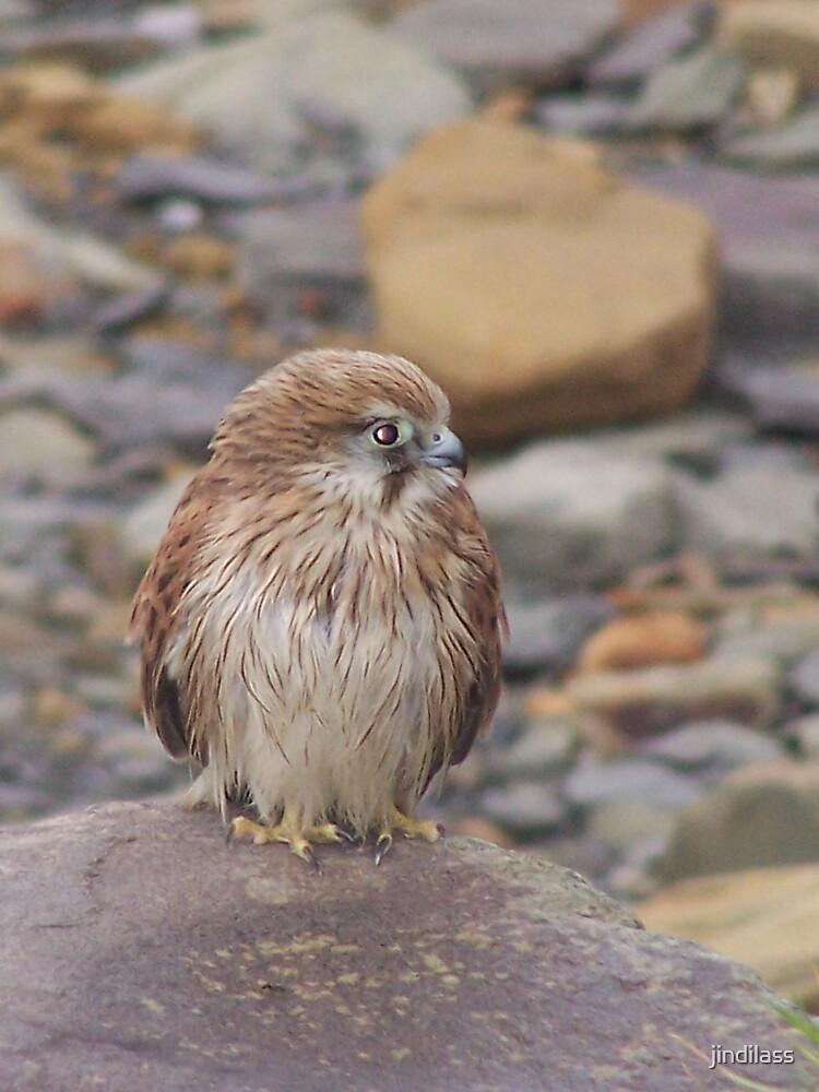 feathered  friend by jindilass