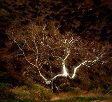 Tree by Susie Valdez