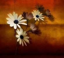 Helianthus by harietteh