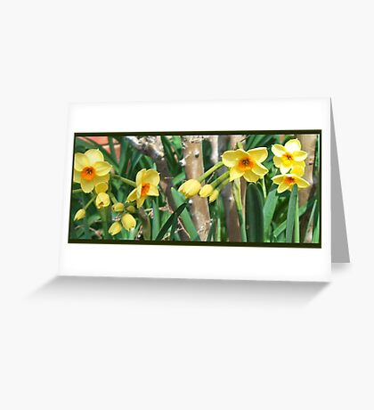 Daffodil Riot of Spring Greeting Card