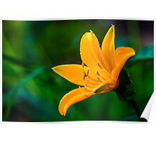 Yellow Wild Large Flower Poster