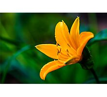 Yellow Wild Large Flower Photographic Print