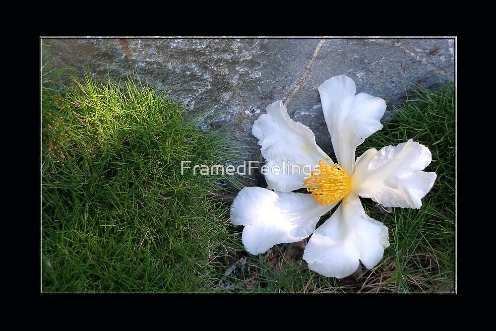 Flower, grass, stone by FramedFeelings