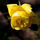 Yellow Rose by Maria A. Barnowl