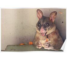Possum. Poster