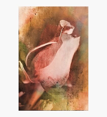 The beauty of a Rose 2 Photographic Print