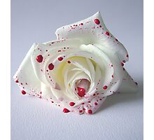 Love Lies Bleeding Photographic Print