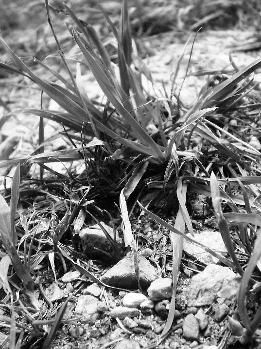 Black&White by megabetic
