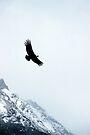 Condor by Walter Quirtmair