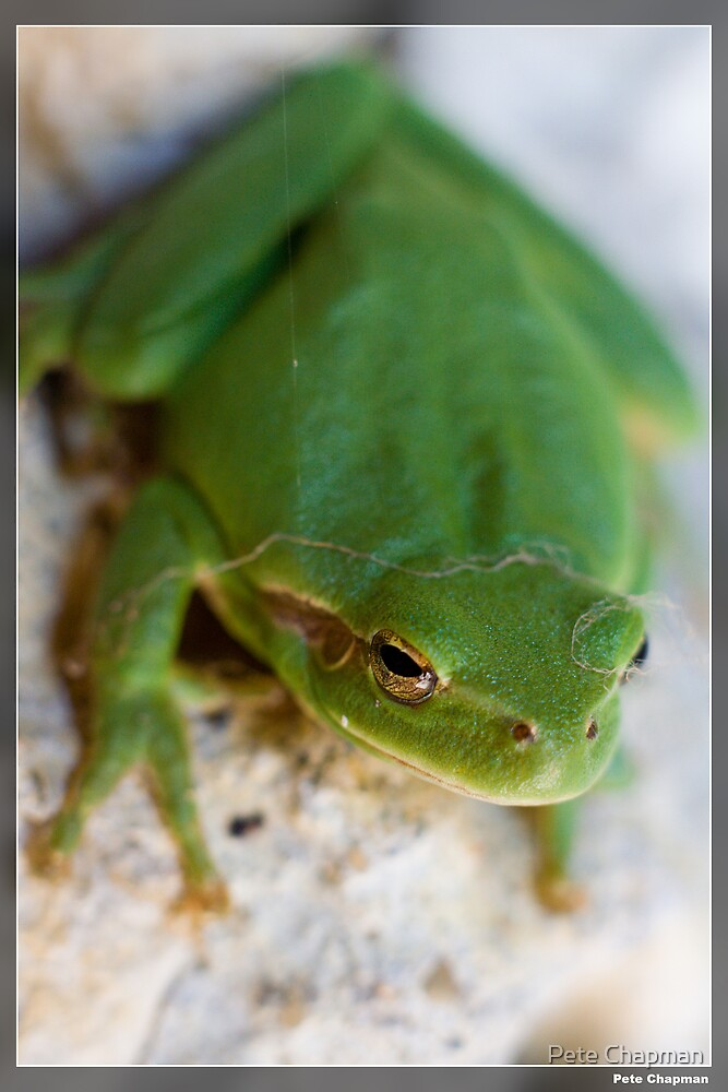 Green Frog by Pete Chapman