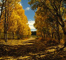 Aspen Trail by John Snodgrass