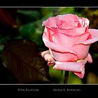 Pink Blossom - Cool Stuff by Maria A. Barnowl