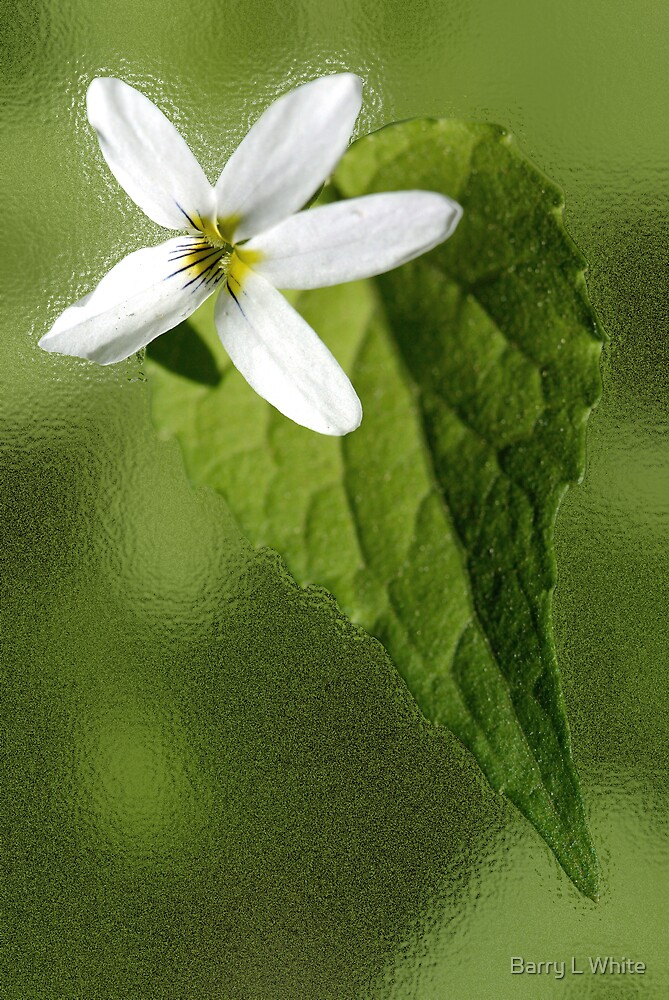 Flower on Leaf #1 by Barry L White