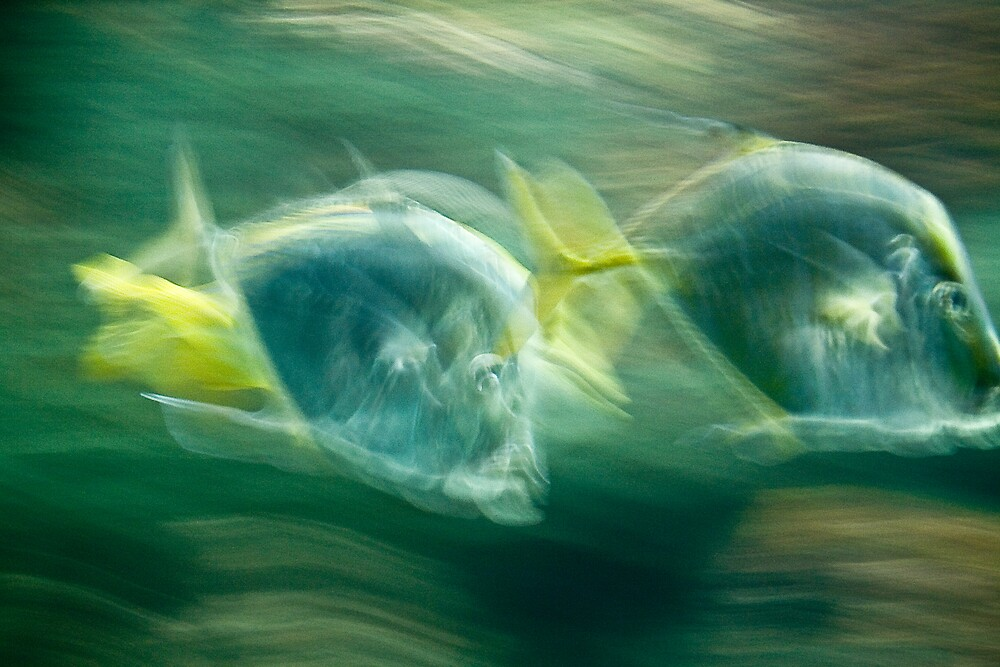 Fish 2 by Adam  Scholl