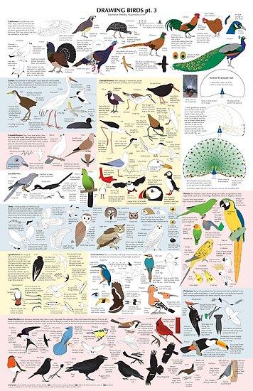 Drawing Birds 3 by Joumana Medlej