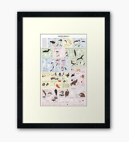 Drawing Birds 2 Framed Print