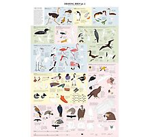 Drawing Birds 2 Photographic Print