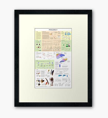 Drawing Birds 1 Framed Print