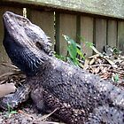 lizard bearded water dragon by aggieeck