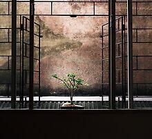 The Urban Way #6 - Garden by Nando MacHado