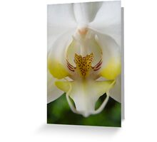 White  Moth Orchid 10 Greeting Card