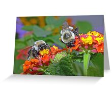 Backyard BUFFET Greeting Card