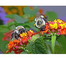 Backyard BUFFET Photographic Print