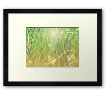Abstract grass background Framed Print