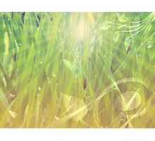 Abstract grass background Photographic Print