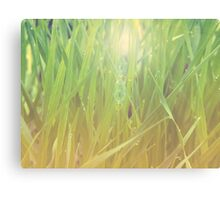 Abstract grass background 2 Canvas Print