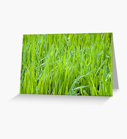 Fresh Green Grass Greeting Card