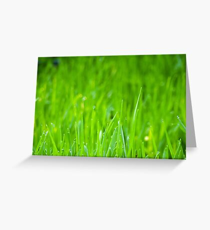 Fresh Green Grass 4 Greeting Card