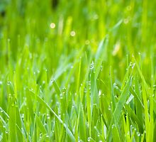 Fresh Green Grass 5 by AnnArtshock