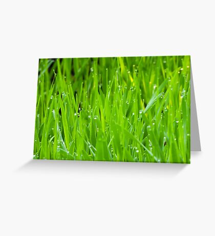 Fresh Green Grass 7 Greeting Card